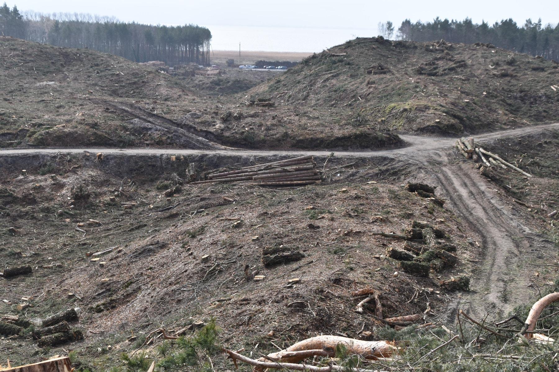 SAD teren po wycince drzew