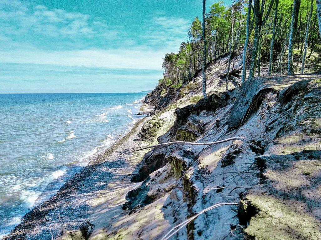 Zdjęcie aktywnego klifu w Orzechowie. Widoczne erodowane, piaszczyste zbocze, na którego koronie rośnie las mieszany – sosnowo-bukowy.