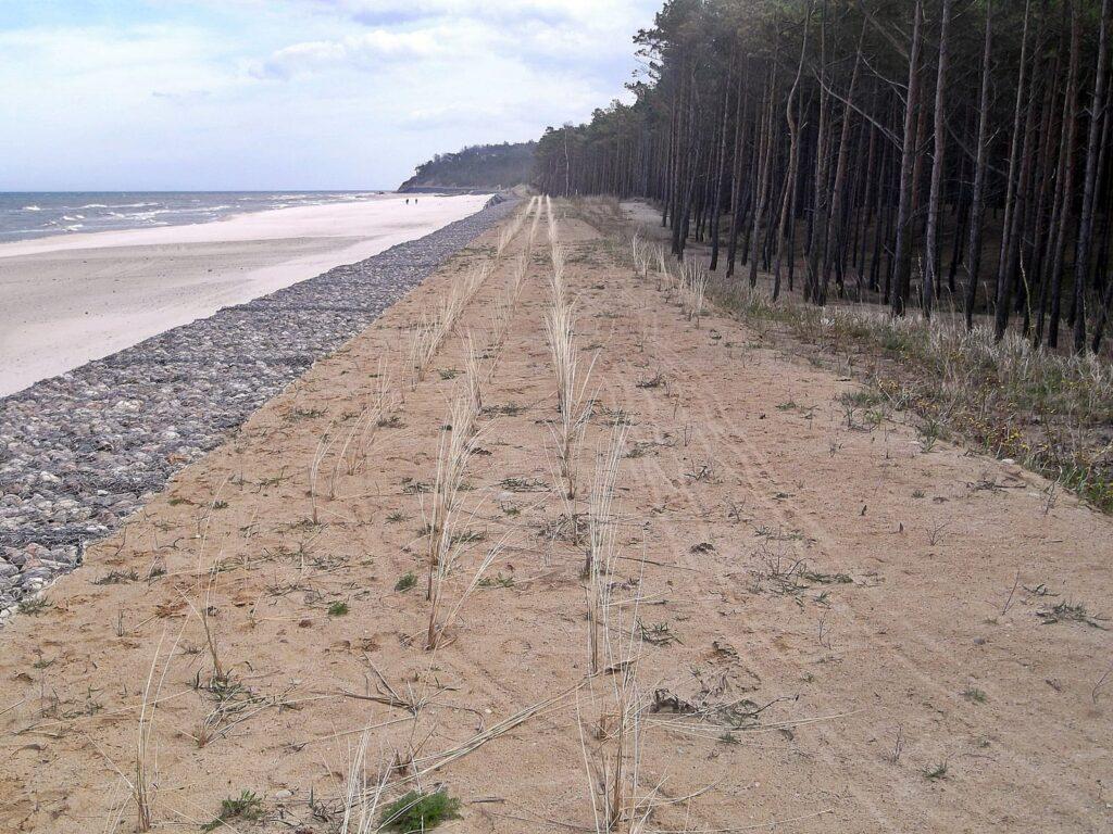 Zdjęcie świeżo posadzonej trawy na koronie wału wydmowego, umocnionego materacem gabionowym (metalowymi koszami wypełnionymi kamieniami – otoczakami).